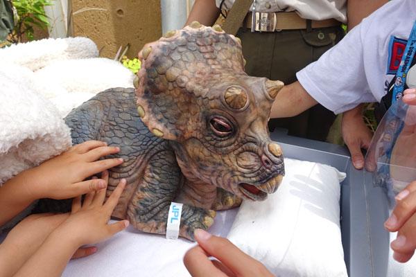 赤ちゃんトリケラトプスにさわることができる