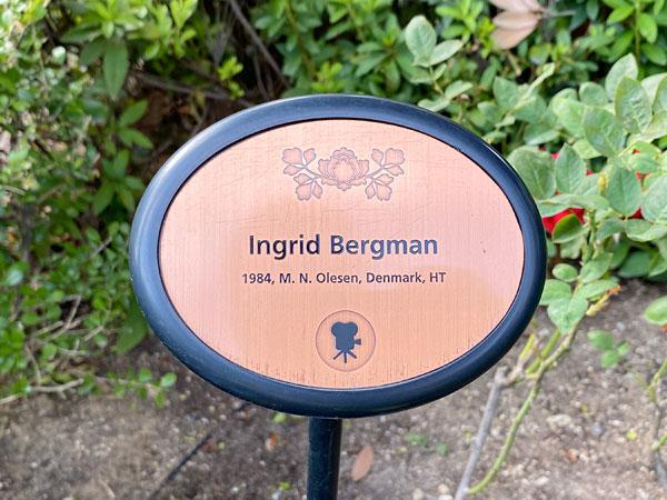 イングリッドバーグマンのネームプレート