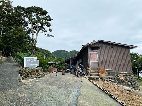 淡路島モンキーセンターのサル山