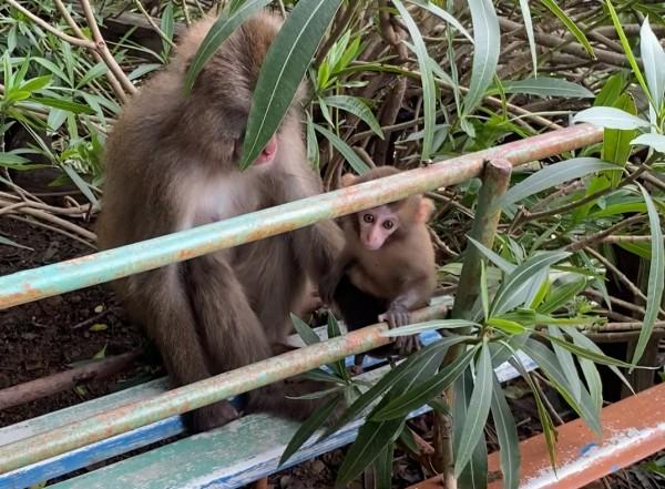 淡路島モンキーセンターの赤ちゃん猿とママ猿